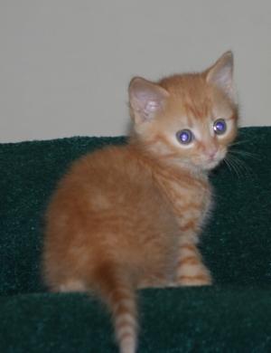 Gracie Kitten